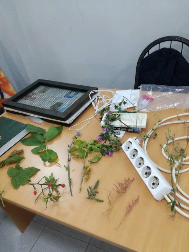 Теренски рад - узорци биљака